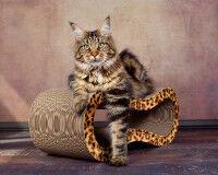 Preview: Singha M design cat tree