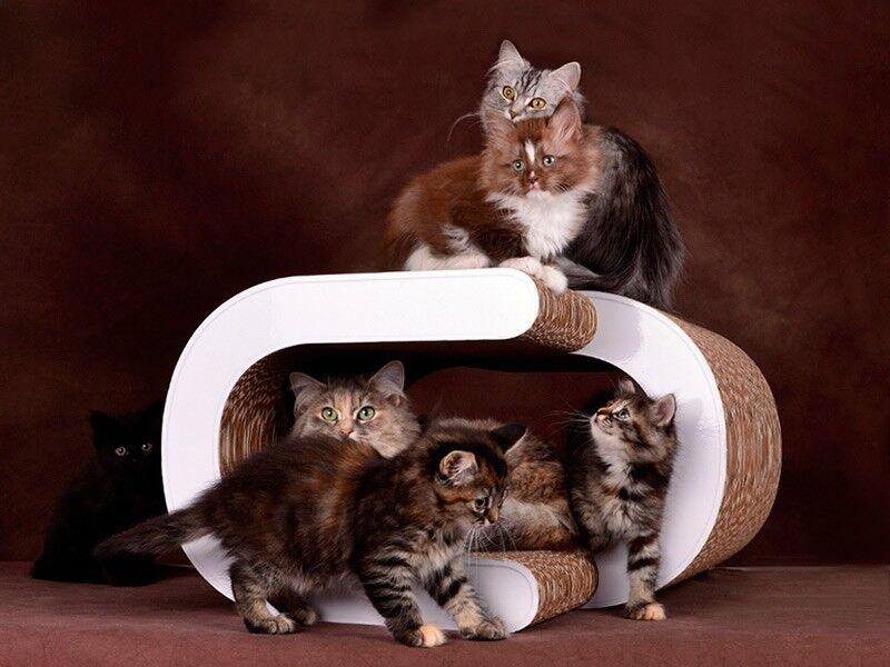 cat on la vague xl sch ne katzenm bel f r grosse katzen. Black Bedroom Furniture Sets. Home Design Ideas