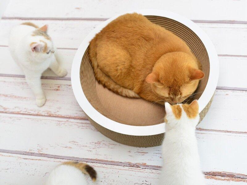 die katzenschale la coupe schale f r katzen aus wellpappe cat on. Black Bedroom Furniture Sets. Home Design Ideas