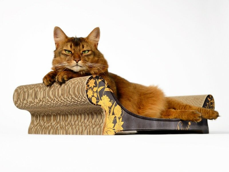 cat on le canap design katzenm bel sch ne sofas f r. Black Bedroom Furniture Sets. Home Design Ideas