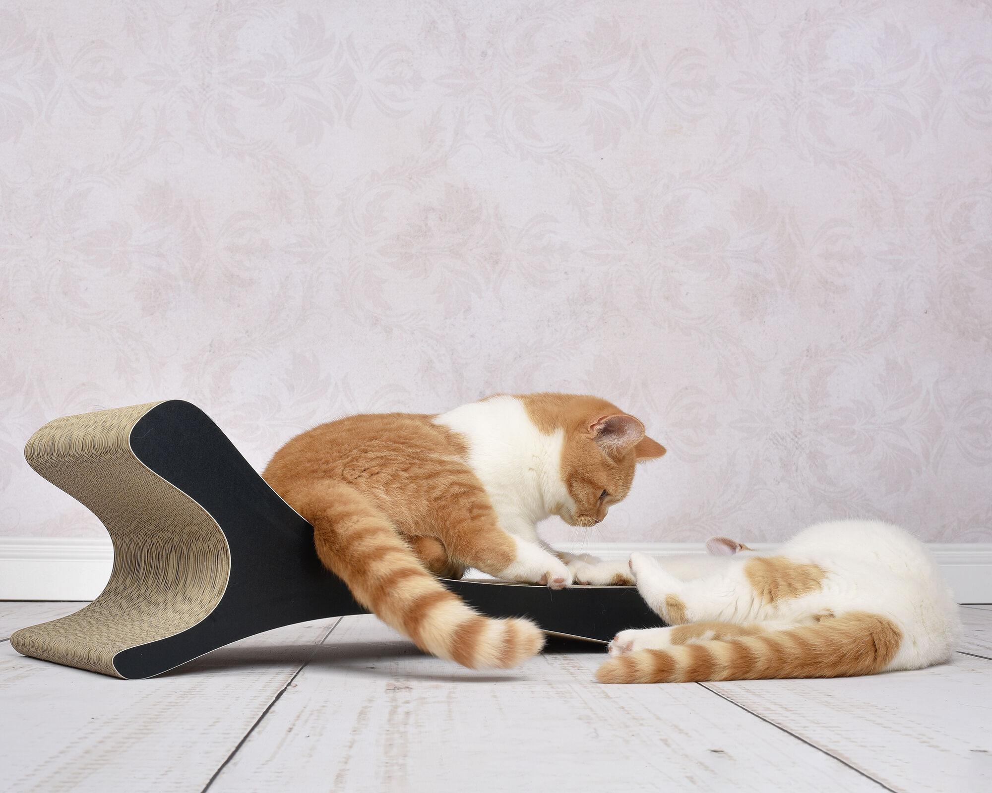 Katzen spielen auf dem cat-on Kratzmöbel Feline aus Wellpappe