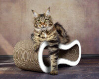 Preview: Sturdy cardboard cat scratcher Singha M, white with grey rims - 000d