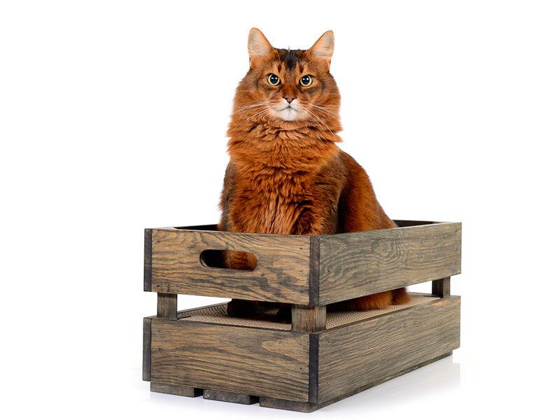 Katzenstiege S Fichte - Basalt Kratzbox