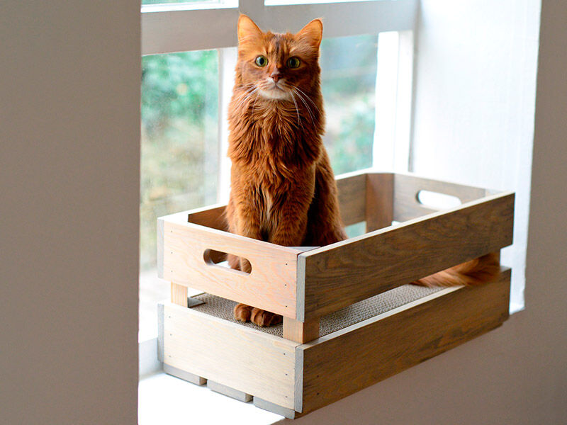 Katzenstiege S Fichte - Steingrau Kratzkiste