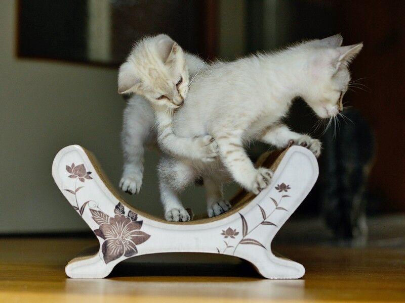 katzensofa le panier cat on kratzm bel kratzbrett aus wellpappe 100 made in germany. Black Bedroom Furniture Sets. Home Design Ideas