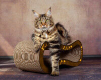 Preview: Brown design cat scratching post Made in Gemrany