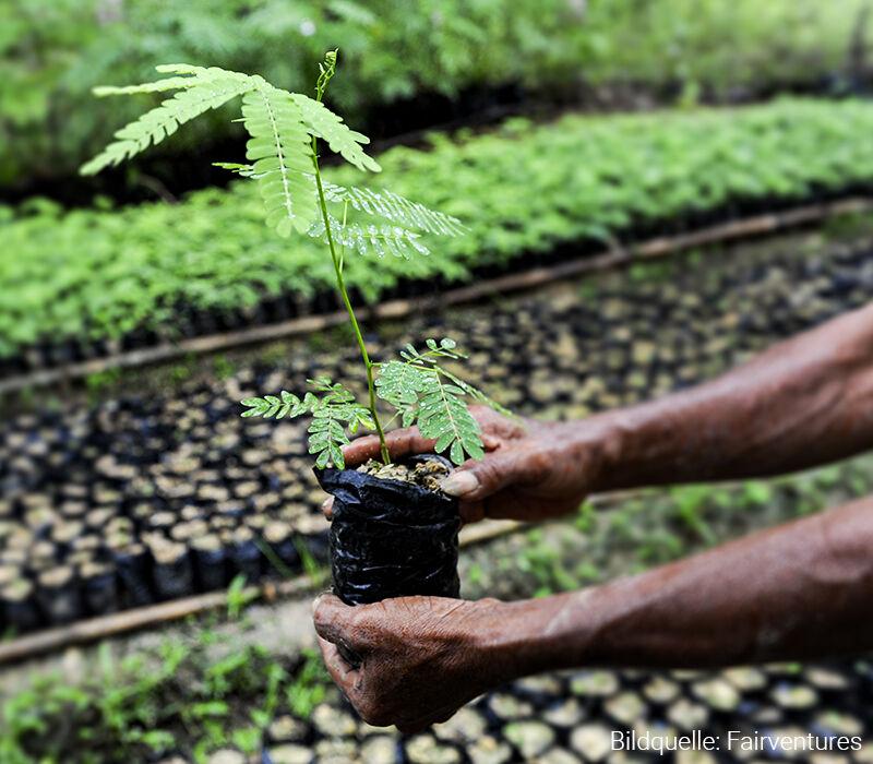 Umwelt- und Klimaschutz durch Aufforsten in Borneo