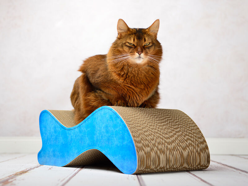 Kabou design cat scratcher