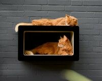 Vorschau: SOI SHIBUI Cat-Walk schwarz