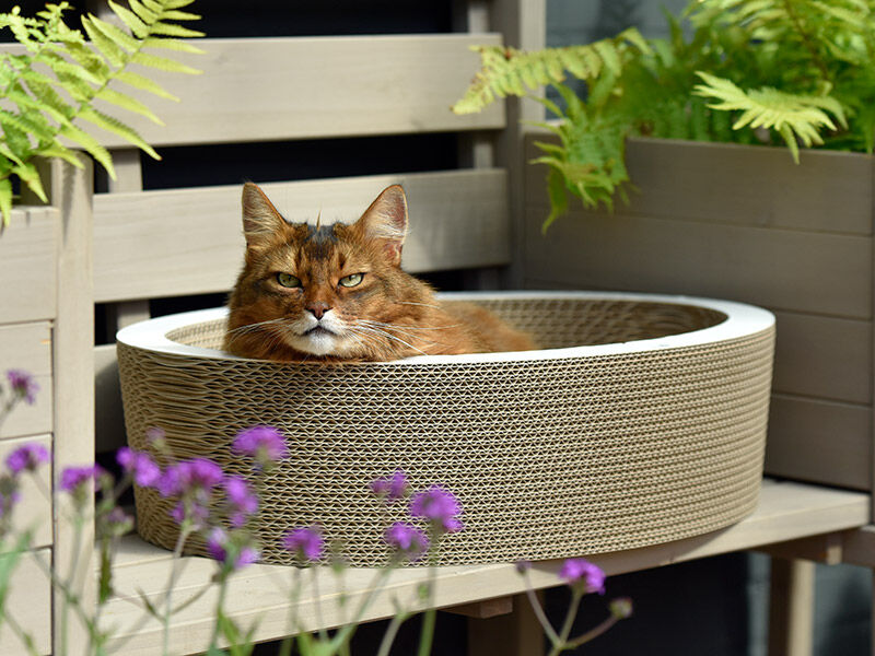 Lovale cat basket