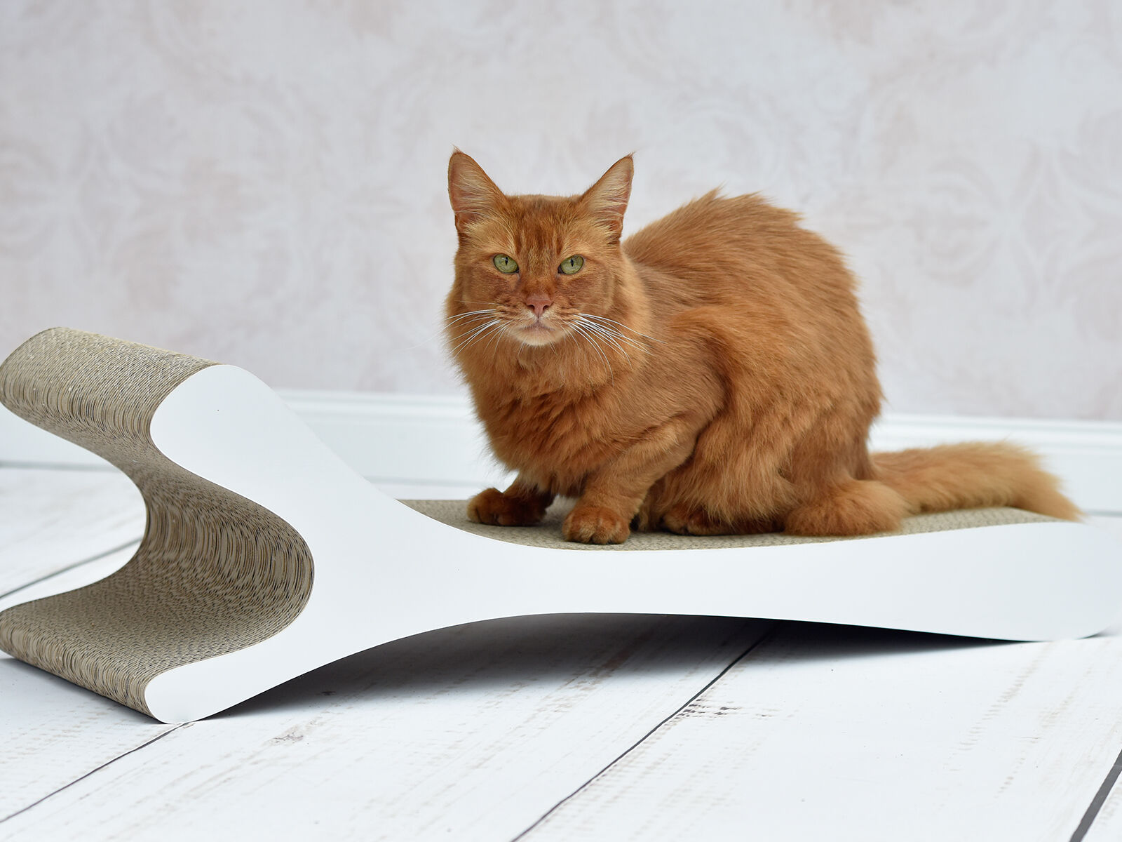 Feline XL - design scratcher