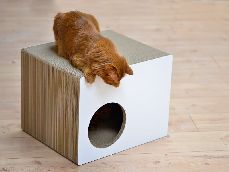 Phredia Eckhaus design cat tree