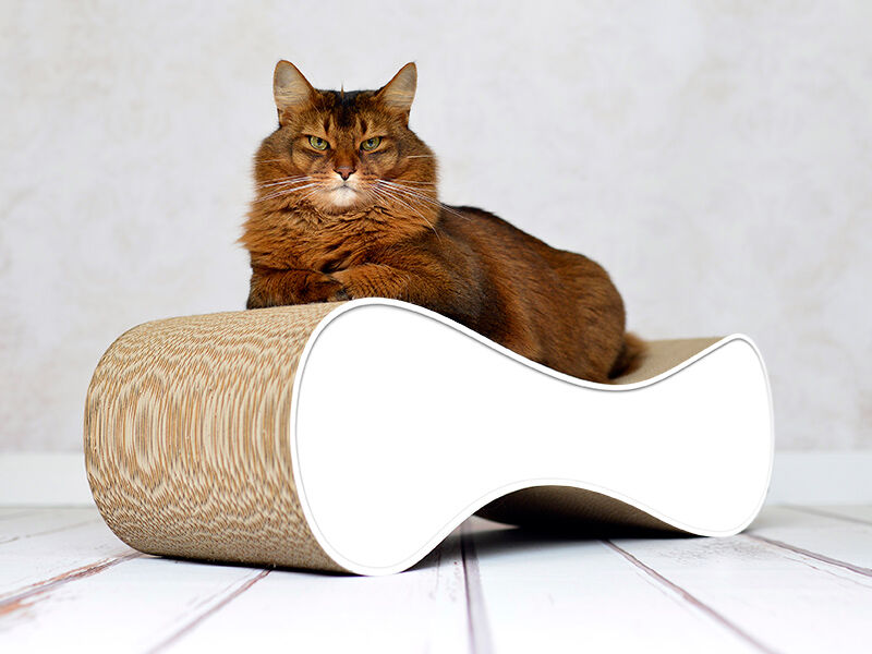 Le Ver - design cat scratcher