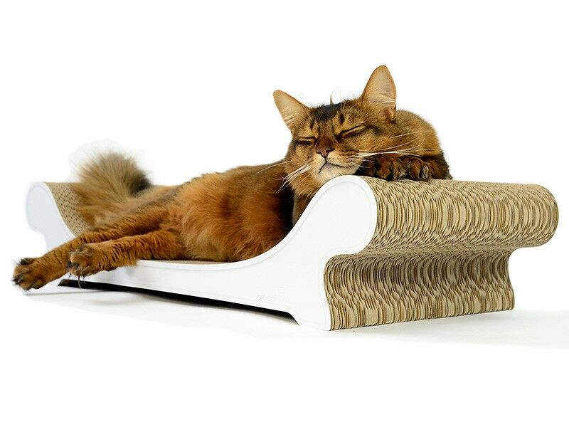 cat on le canap design katzenm bel sch ne sofas f r. Black Bedroom Furniture Sets. Home Design Ideas