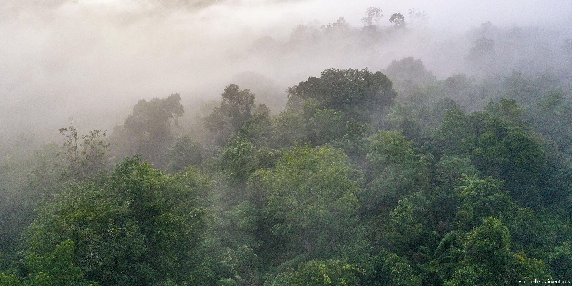 Sustainable environmental protection through reforestation in Borneo