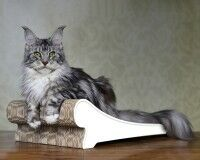 Lounger cat scratcher