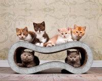 Preview: cardboard cat scratcher Singha M in light grey