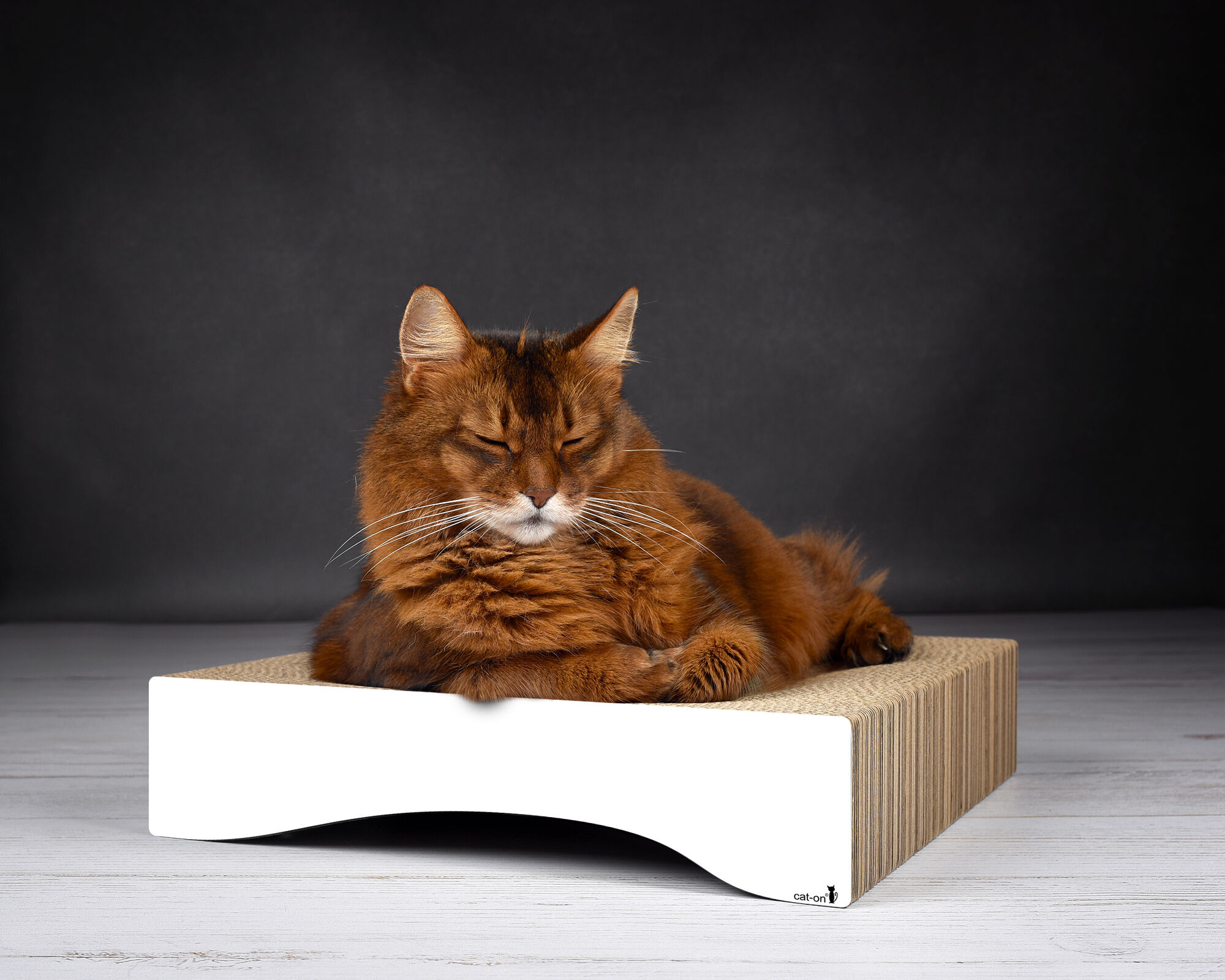 Katzenschale Le Moule