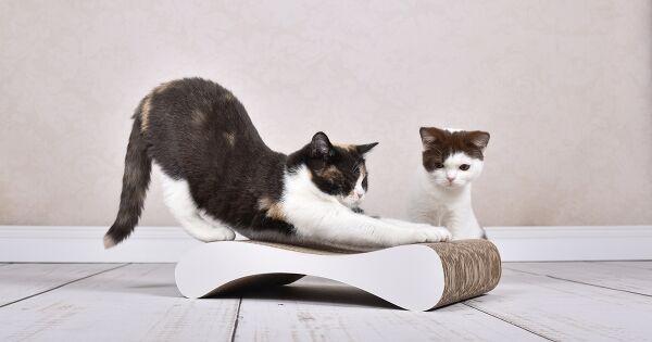 katzen-lieben-es-auf-cat-on-wellpappe-zu-kratzen