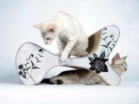 Aperçu: Fauteuil design & griffoir pour chats   Molecular Fauetuil