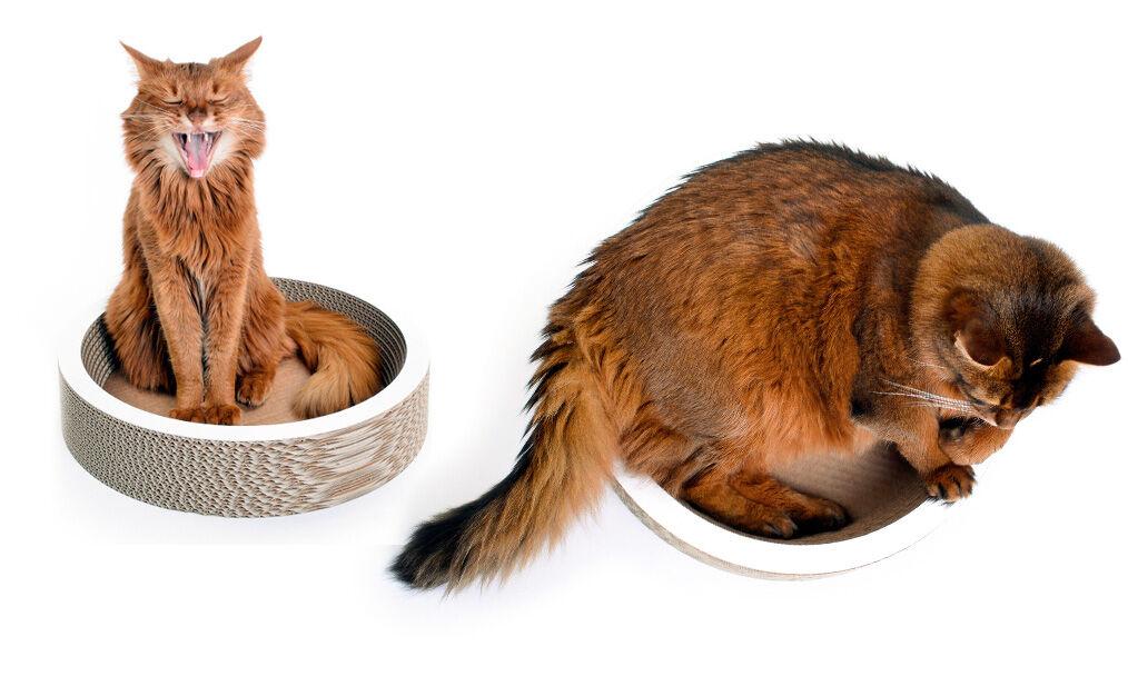 Schale für Katzen