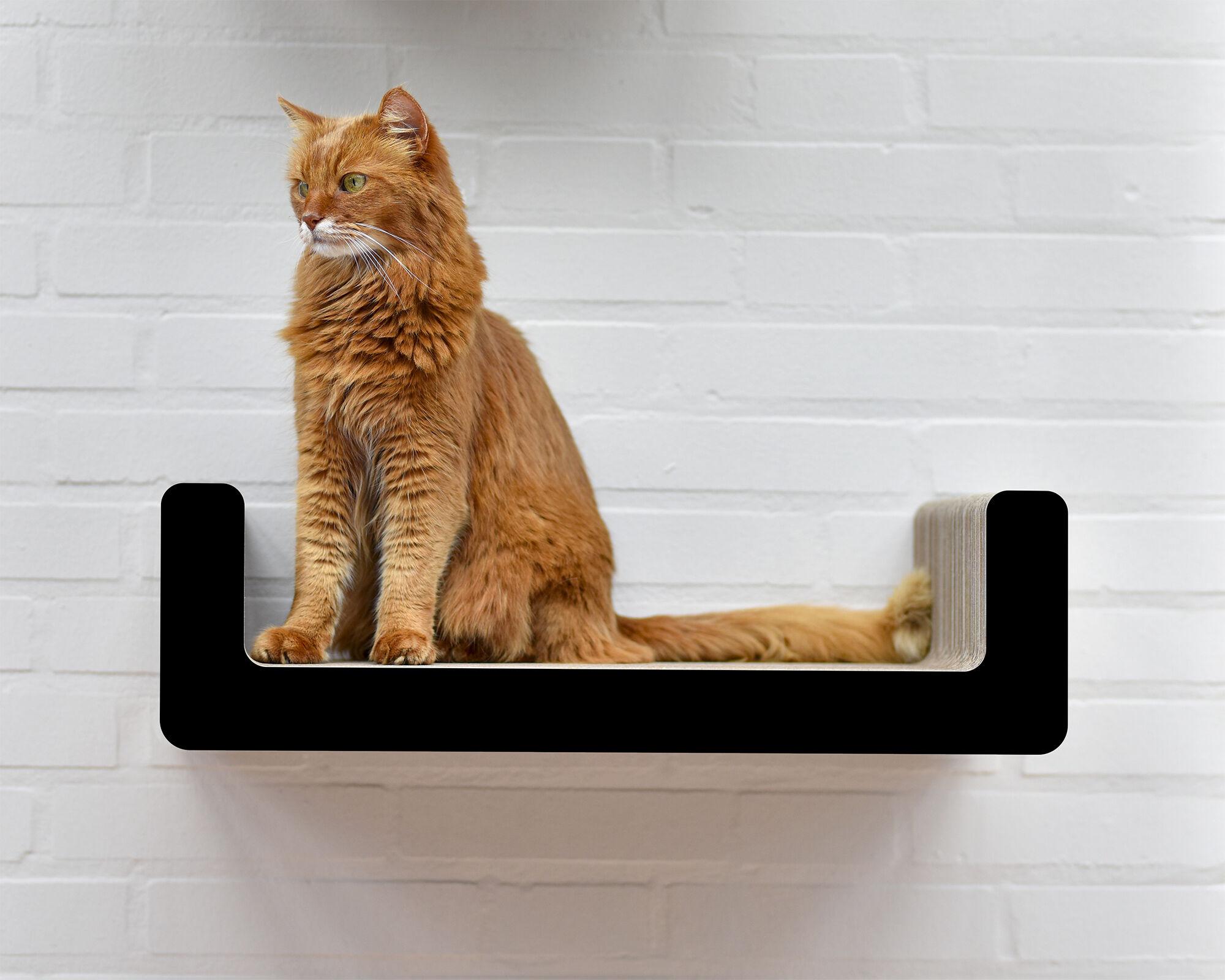 Suma Takai Katzen-Wandliege schwarz