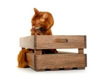 cat crate in oak-wood, oiled in walnut, combined wood and carboard scratcher for cats