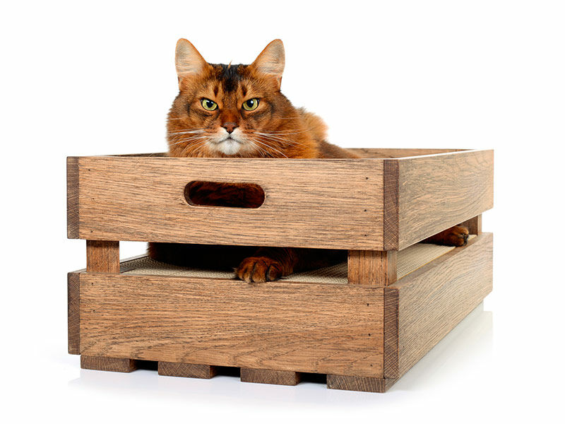 cat crate L - oak-walnut