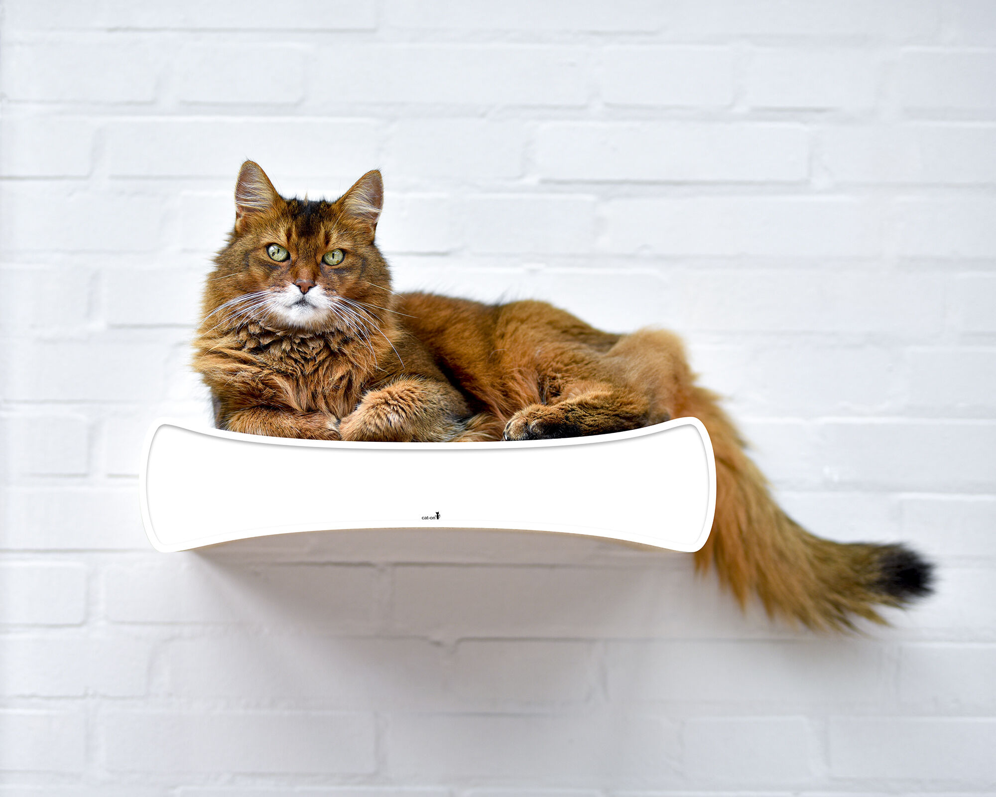 Le Plateau S cat shelve