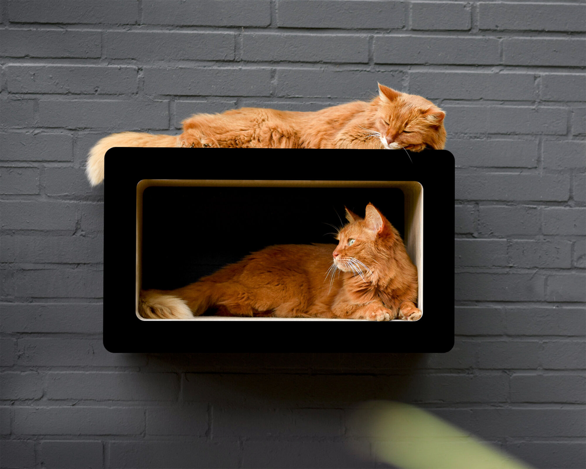 SOI SHIBUI Cat-Walk schwarz