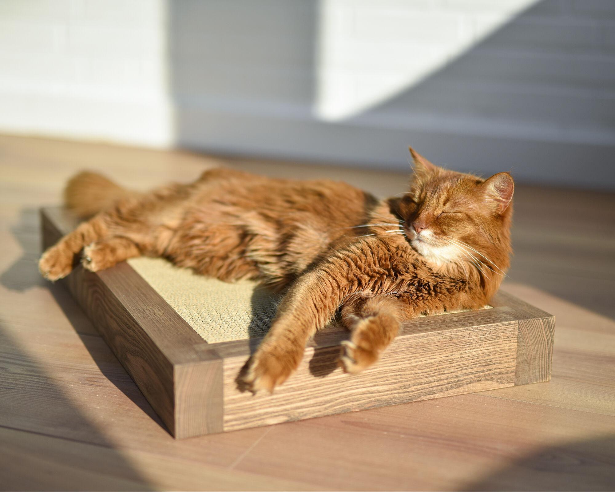 Boisé - griffoir en bois de frêne-noyer clair