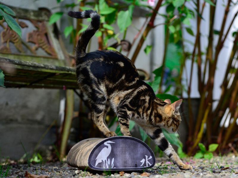 Le Pain Kratzbrett für Katzen